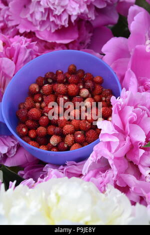 delicious red summer forest strawberry - Stock Image