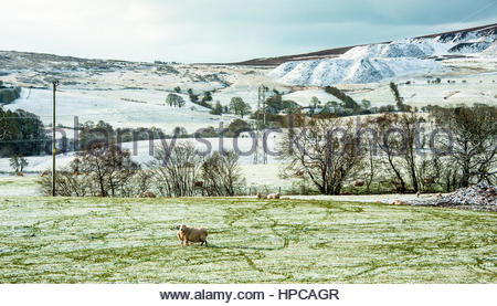 Sheep grazing on snow covered hills at Bryneglwys, ner Llangollen, North Wales at the end of April 2016. - Stock Image