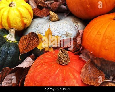 A variety of colourful pumpkins winter squash and gourds surrounded by fallen autumn leaves - Stock Image