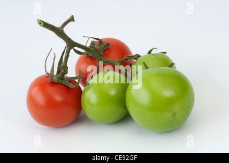 Tomato (Lycopersicon esculentum). Fruit in different stages of ripening. Studio picture against a white background. - Stock Image