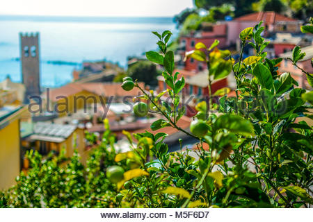 Lemons ripen on a tree in the colorful village of Cinque Terre Italy with the Chiesa di San Giovanni Battista, church - Stock Image