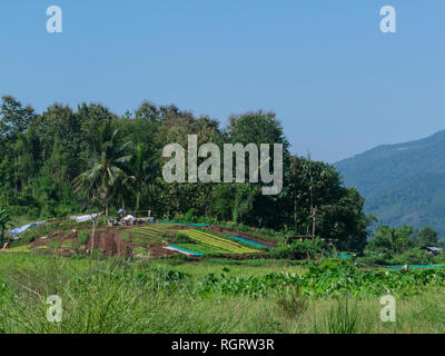 Looking across to farmland with a field of cultivated vegetables very fertile and rich soil Luang Prabang Laos Asia - Stock Image