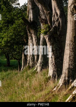 A tow of tree trunks with grass underneath - Stock Image