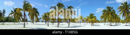 Playa Sirena Beach Tourist Resort and Palm Trees Wide Panoramic Landscape on Cayo Largo Tropical Island in Caribbean Sea, Cuban Coast - Stock Image