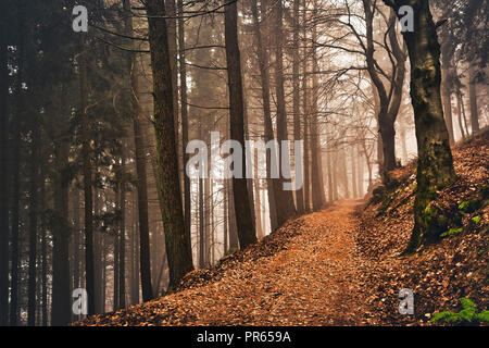path, fog and autumn colors in the woods of Campo dei Fiori Varese - Stock Image
