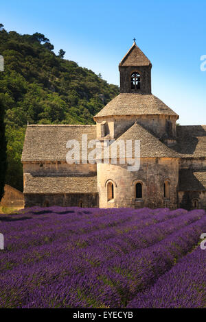 Notre-Dame de Senanque  Abbey Provence France with lavender in full bloom - Stock Image