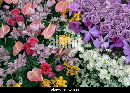 Rose perennial flowering shrub vine genus Rosa Valentine's Day close up roses natural flowers greenery Carnation - Stock Image