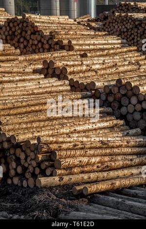 Pile Of Wood Logs As Natural Resource - Stock Image