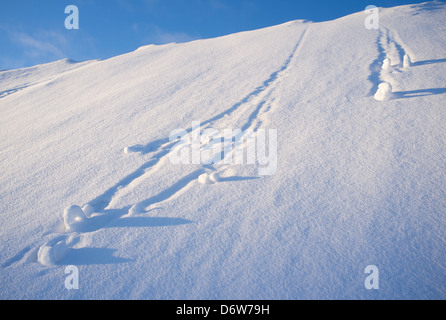 Snowballs rolling down at steep hill , Finland - Stock Image