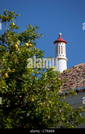 Portugal, Algarve, Silves, Lemon Tree & Chimney - Stock Image
