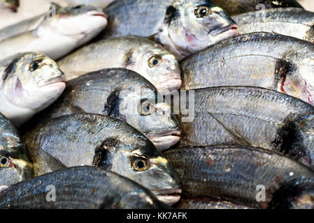 Rows of fresh sea bream on display at a farmer fishmongers stall in Essex England - Stock Image