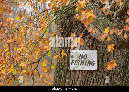 Benbow pond near Midhurst, West Sussex, UK. Thursday 15th November 2018. UK Weather, an array of autumn colours helps to cheer up and otherwise drab autumn day at the idylic Benbow Pond near midhurst. © Photovision Images News / Alamy Live News. Credit: Photovision Images News/Alamy Live News - Stock Image
