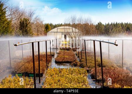 water irrigation system working on plant nursery plantation - Stock Image