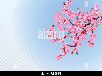 Sakura. Lush branches with light purple flowers, leaves and cherry buds. Defocus effect. On a transparent background. illustration - Stock Image