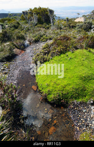 Top of the catchment: small creek starting amongst alpine cushion plants on the summit of Mt Wellington, with Hobart in the distance, Tasmania, Austra - Stock Image