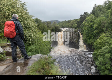 High Force, Teesdale, County Durham, UK.  13th June 2019. UK Weather.  A rain soaked walker enjoys the sight of the River Tees thundering over High Force in the North Pennines. Credit: David Forster/Alamy Live News - Stock Image