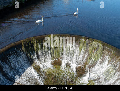 Swans on the lake at Huelgoat, Finistère, Brittany, France, Europe - Stock Image