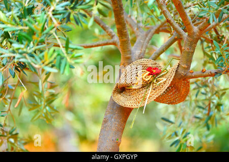 Womens hat on the tree in the olives garden, autumn harvest season, lazy day in countryside, relaxation after agricultural - Stock Image