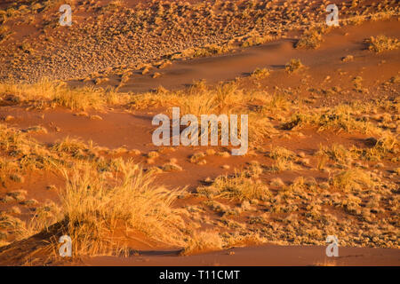 The famous red sand dunes at Sossusvlei at sunset, inside the Namib-Naukluft Park in Namibia. - Stock Image