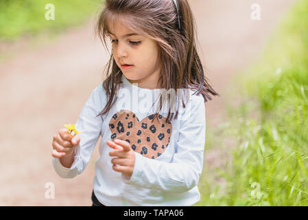 Adorable four years old cute little girl picks wild flower at meadow in a sunny day - Stock Image