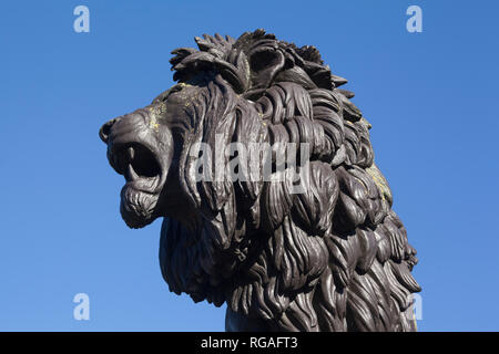 The head of the bronze statue of the Forbury Lion in Forbury Gardens, Reading, Berkshire - Stock Image