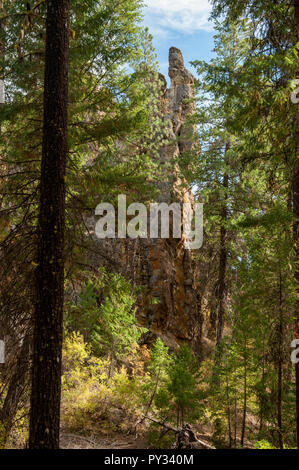 One of the pillars of volcanic tuff, barely visible through the thick pine forest at the Brennan Palisades near Prineville, Oregon. - Stock Image