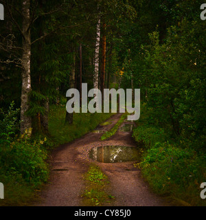 Path through the woods on a summer night. - Stock Image