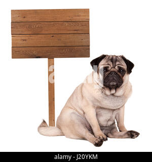 lovely cute pug puppy dog sitting down next to blank wooden sign on pole, isolated on white background - Stock Image