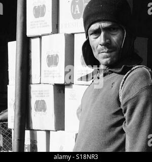 Man in front of apple boxes - Stock Image