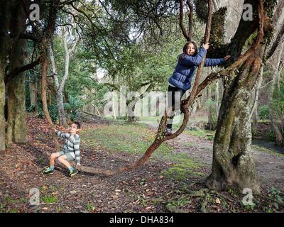 The vine swing - Stock Image