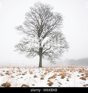 Gainford, County Durham, UK. 5th March 2018. UK weather. A foggy and misty day in Teesdale as the thaw continues - Stock Image