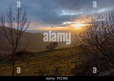 Lonely trees on a mountain cliff, with others mountains and mist on the background, with warm sunset colors - Stock Image
