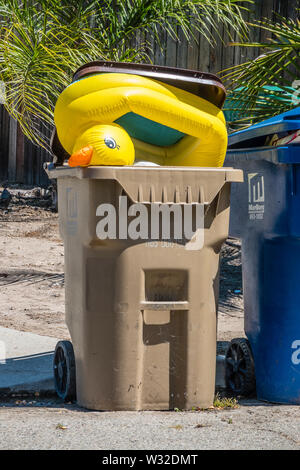 A yellow vinyl rubber ducky sticky out of a trash container in Santa Barbara. The rubber ducky has achieved iconic status in Western culture and gener - Stock Image