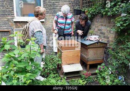 Ladies looking at bee hives, Melissa Garden Bee Sanctuary, Compton Terrace, London Borough of Islington - Stock Image