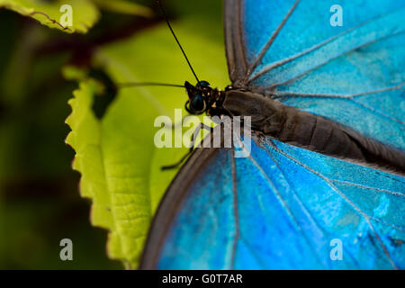 A butterfly close up with a macro lens - Stock Image