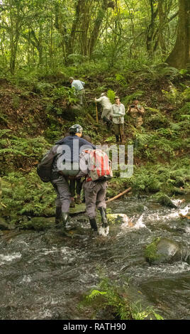porters carrying tourist over river, Bwindi Impenetrable Forest, Uganda, Africa - Stock Image