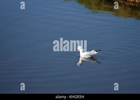 Hampshire, UK. 17th Nov, 2017. Birds, animals and people enjoy beautiful autumn weather in Lymington and Keyhaven - Stock Image