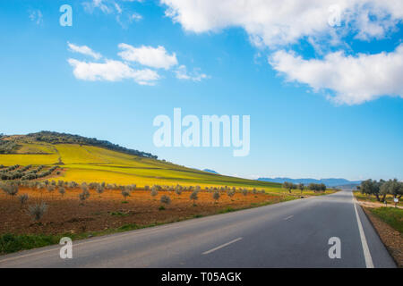 Road to Los Cortijos and olive groves. Fuente El Fresno, Ciudad Real province, Castilla La Mancha, Spain. - Stock Image