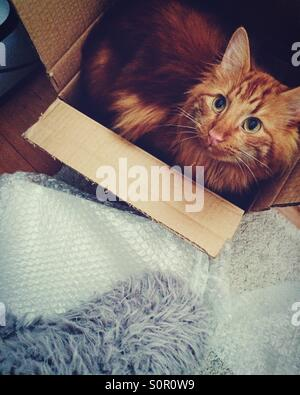 Cat in a box - Stock Image