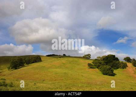 Rolling hills in Sonoma County, California, USA - Stock Image