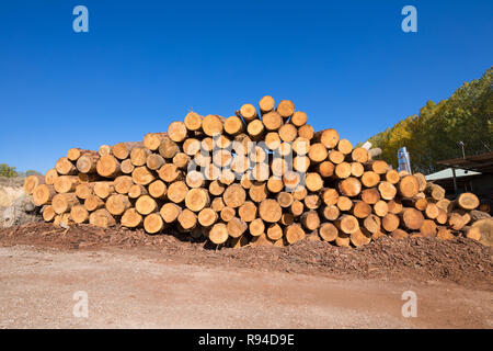 a pile of wooden logs, big trunks of tall trees cut, stacked outside in the sawmill - Stock Image