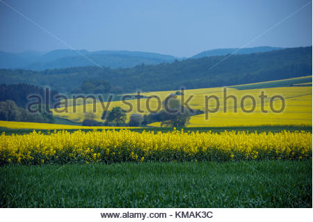 Partial clarity, with bright green grass and yellow flowers - Stock Image