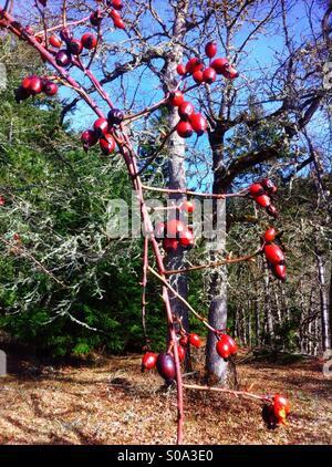 Berries - Stock Image