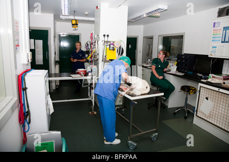 The Prep Room in a Veterinary Clinic in the UK - Stock Image