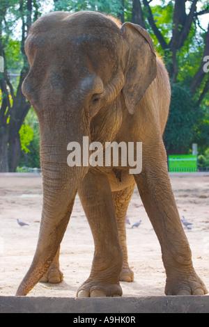 Elephant portrait - Stock Image