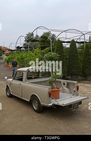 plant loaded on a vintage vehicle at garden center - Stock Image