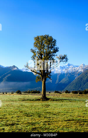 Tree and mountain - Stock Image