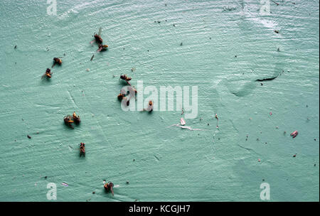 Mass of dead wasps collected on a dark green painted windowsill - Stock Image