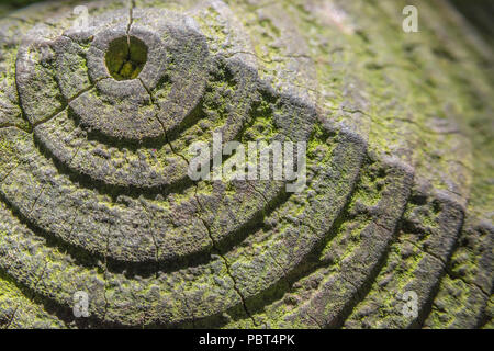 Sun's shadow effect on rings in a fencing post. Possible metaphor concentric circles, inner circle. - Stock Image