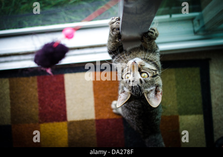A cat playing - Stock Image